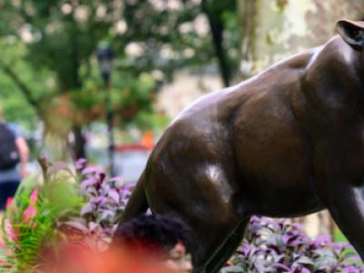 Pitt Panther Statue